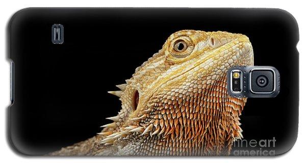 Closeup Head Of Bearded Dragon Llizard, Agama, Isolated Black Background Galaxy S5 Case
