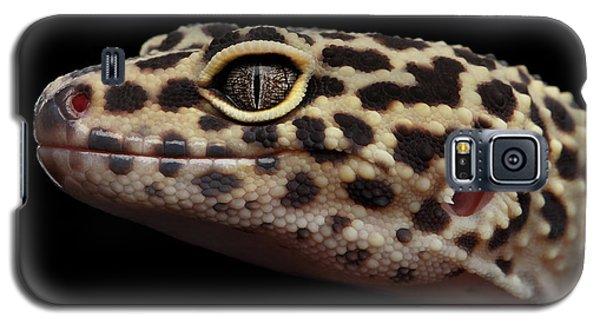 Closeup Head Of Leopard Gecko Eublepharis Macularius Isolated On Black Background Galaxy S5 Case by Sergey Taran