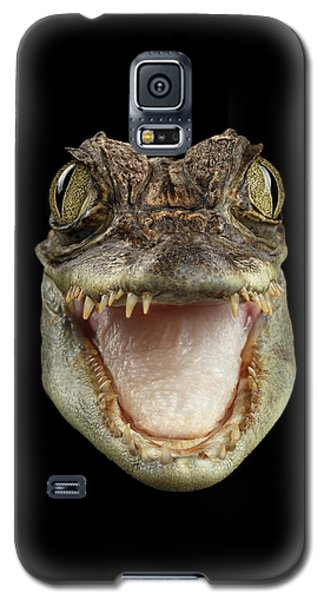 Closeup Head Of Young Cayman Crocodile , Reptile With Opened Mouth Isolated On Black Background, Fro Galaxy S5 Case