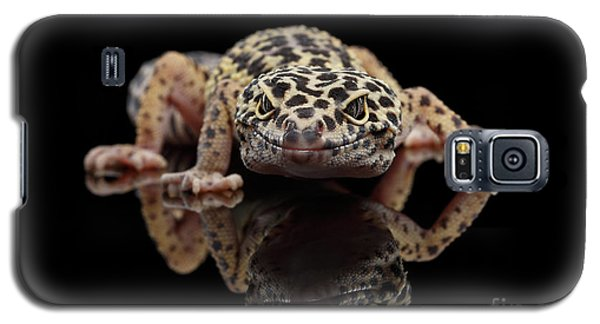 Closeup Leopard Gecko Eublepharis Macularius Isolated On Black Background, Front View Galaxy S5 Case by Sergey Taran