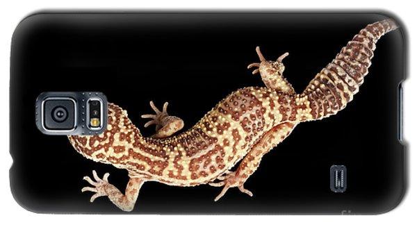 Closeup Leopard Gecko Eublepharis Macularius Isolated On Black Background Galaxy S5 Case by Sergey Taran