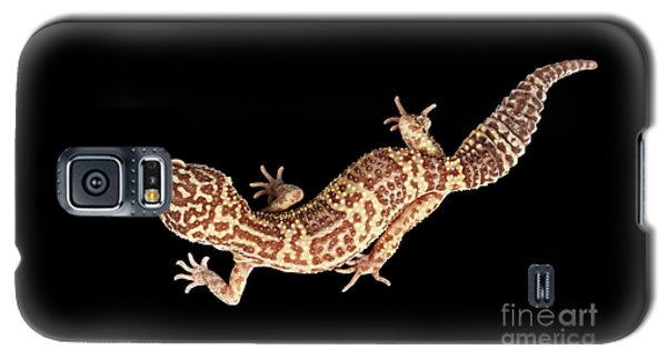 Closeup Leopard Gecko Eublepharis Macularius Isolated On Black Background Galaxy S5 Case