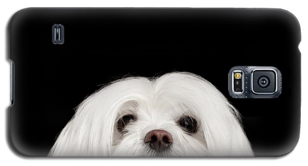 Closeup Nosey White Maltese Dog Looking In Camera Isolated On Black Background Galaxy S5 Case