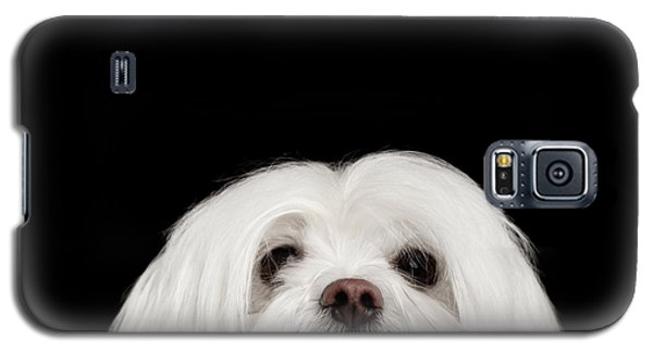 Dog Galaxy S5 Case - Closeup Nosey White Maltese Dog Looking In Camera Isolated On Black Background by Sergey Taran