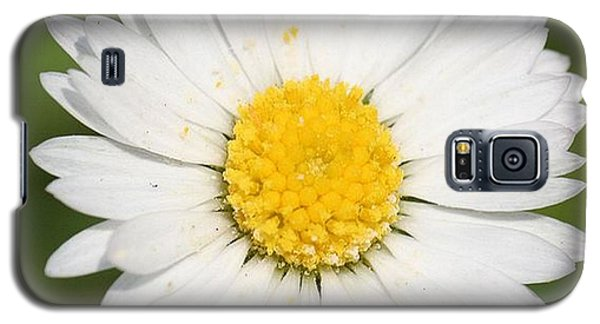 Closeup Of A Beautiful Yellow And White Daisy Flower Galaxy S5 Case