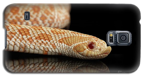 Closeup Pink Pastel Albino Western Hognose Snake, Heterodon Nasicus Isolated On Black Background Galaxy S5 Case by Sergey Taran