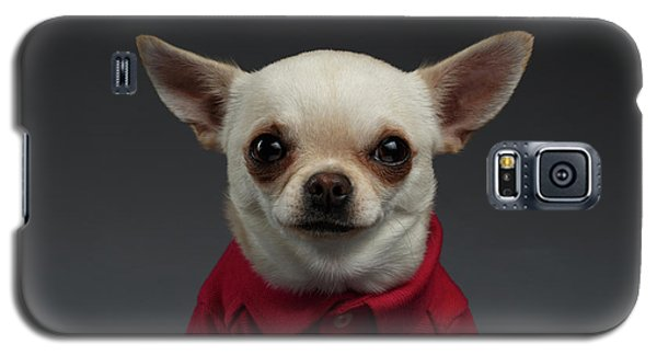 Closeup Portrait Chihuahua Dog In Stylish Clothes. Gray Background Galaxy S5 Case