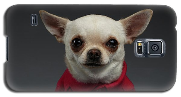 Dog Galaxy S5 Case - Closeup Portrait Chihuahua Dog In Stylish Clothes. Gray Background by Sergey Taran