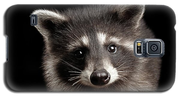 Closeup Portrait Cute Baby Raccoon Isolated On Black Background Galaxy S5 Case