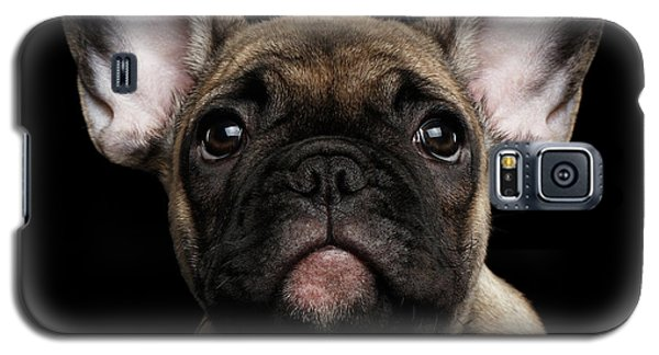 Closeup Portrait French Bulldog Puppy, Cute Looking In Camera Galaxy S5 Case