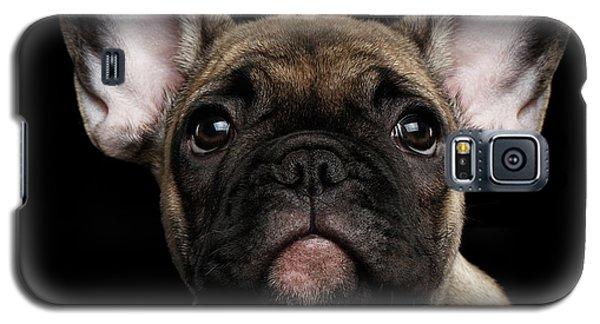 Dog Galaxy S5 Case - Closeup Portrait French Bulldog Puppy, Cute Looking In Camera by Sergey Taran