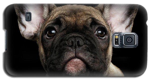 Closeup Portrait French Bulldog Puppy, Cute Looking In Camera Galaxy S5 Case
