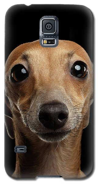 Closeup Portrait Italian Greyhound Dog Looking In Camera Isolated Black Galaxy S5 Case