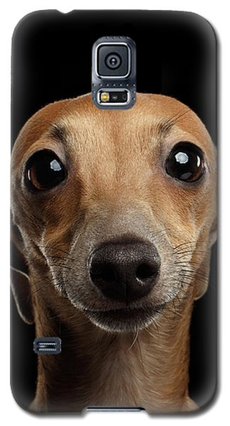 Dog Galaxy S5 Case - Closeup Portrait Italian Greyhound Dog Looking In Camera Isolated Black by Sergey Taran
