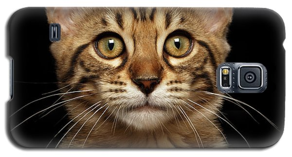 Closeup Portrait Of Bengal Kitty Isolated Black Background Galaxy S5 Case by Sergey Taran