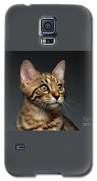 Closeup Portrait Of Bengal Male Kitty On Dark Background Galaxy S5 Case by Sergey Taran