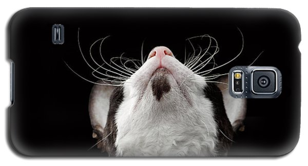 Closeup Portrait Of Cornish Rex Looking Up Isolated On Black  Galaxy S5 Case