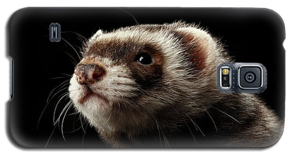 Closeup Portrait Of Funny Ferret Looking At The Camera Isolated On Black Background, Front View Galaxy S5 Case