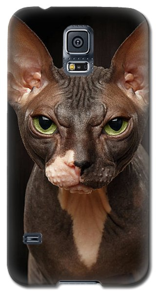 Closeup Portrait Of Grumpy Sphynx Cat Front View On Black  Galaxy S5 Case