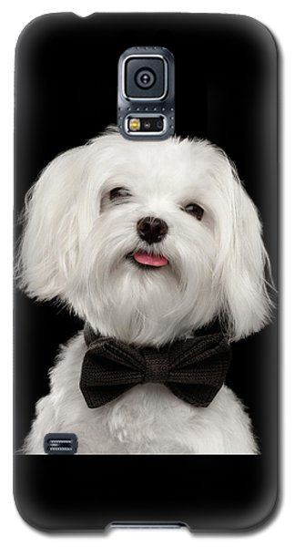 Closeup Portrait Of Happy White Maltese Dog With Bow Looking In Camera Isolated On Black Background Galaxy S5 Case