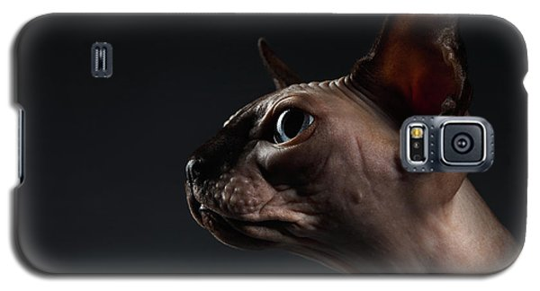 Closeup Portrait Of Sphynx Cat In Profile View On Black  Galaxy S5 Case