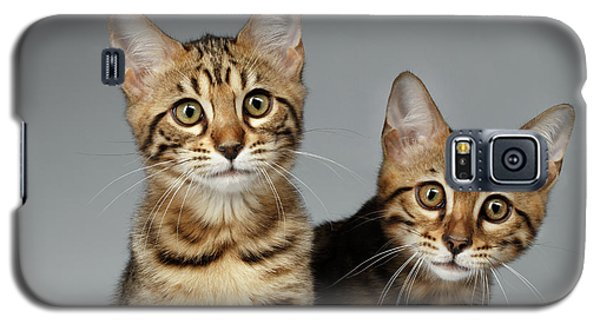 Closeup Portrait Of Two Bengal Kitten On White Background Galaxy S5 Case by Sergey Taran