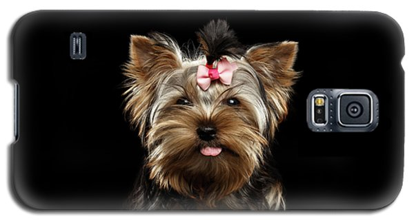 Closeup Portrait Of Yorkshire Terrier Dog On Black Background Galaxy S5 Case