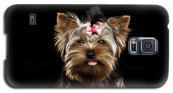 Dog Galaxy S5 Case - Closeup Portrait Of Yorkshire Terrier Dog On Black Background by Sergey Taran