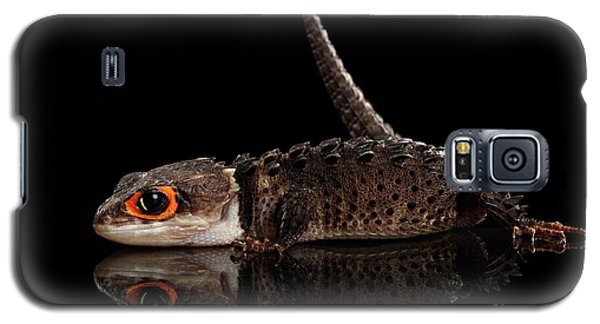 Closeup Red-eyed Crocodile Skink, Tribolonotus Gracilis, Isolated On Black Background Galaxy S5 Case