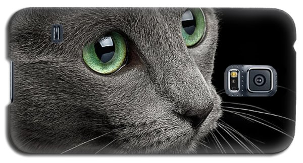 Closeup Russian Blue Galaxy S5 Case