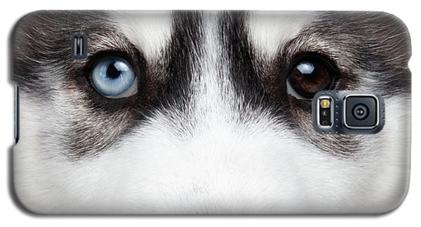 Dog Galaxy S5 Case - Closeup Siberian Husky Puppy Different Eyes by Sergey Taran