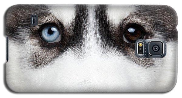 Closeup Siberian Husky Puppy Different Eyes Galaxy S5 Case