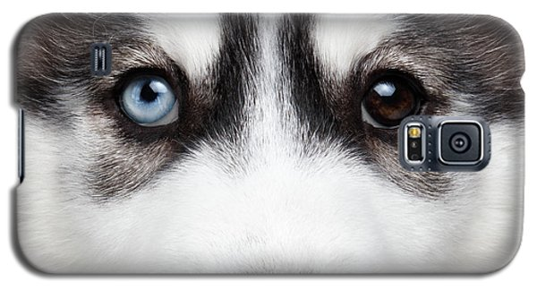 Closeup Siberian Husky Puppy Different Eyes Galaxy S5 Case