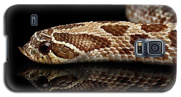 Closeup Western Hognose Snake, Isolated On Black Background Galaxy S5 Case