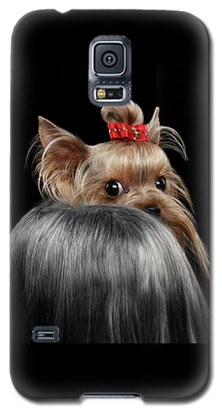Dog Galaxy S5 Case -  Closeup Yorkshire Terrier Dog, Long Groomed Hair Pity Looking Back by Sergey Taran