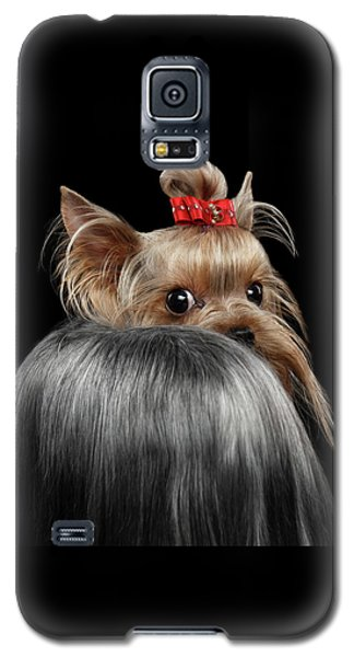 Closeup Yorkshire Terrier Dog, Long Groomed Hair Pity Looking Back Galaxy S5 Case