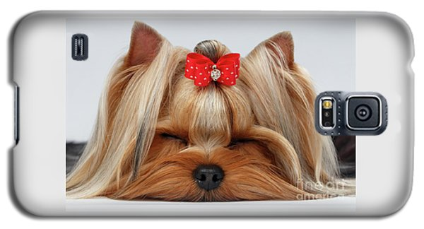 Closeup Yorkshire Terrier Dog With Closed Eyes Lying On White  Galaxy S5 Case by Sergey Taran
