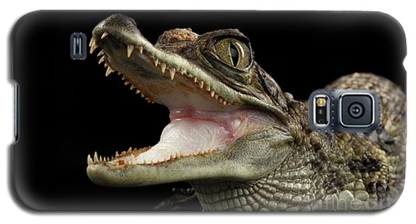 Closeup Young Cayman Crocodile, Reptile With Opened Mouth Isolated On Black Background Galaxy S5 Case
