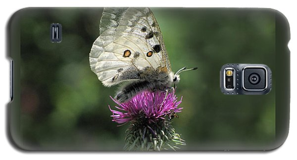 Galaxy S5 Case featuring the photograph Clouded Apollo Butterfly by Jacqi Elmslie