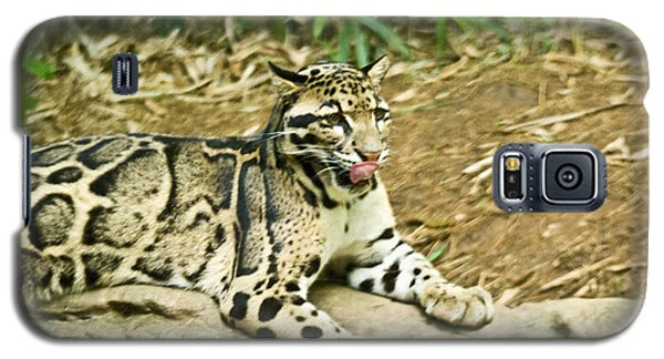 Clouded Leopard 1 Galaxy S5 Case