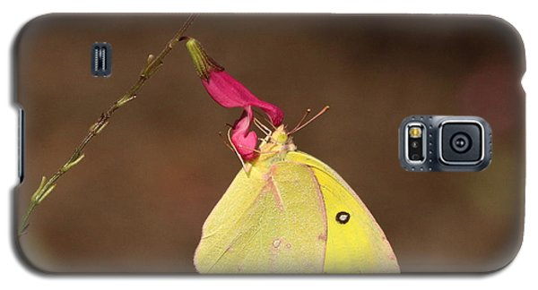 Clouded Sulphur Butterfly On Pink Wildflower Galaxy S5 Case