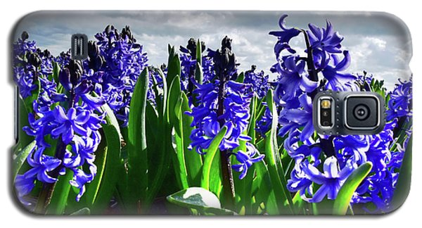 Clouds Over The Purple Hyacinth Field Galaxy S5 Case by Mihaela Pater
