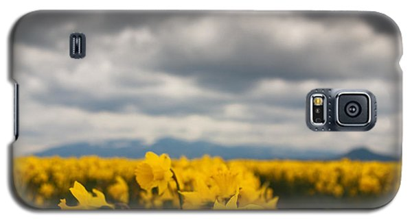 Galaxy S5 Case featuring the photograph Cloudy With A Chance Of Daffodils by Erin Kohlenberg
