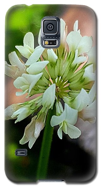 Clover #2 Galaxy S5 Case