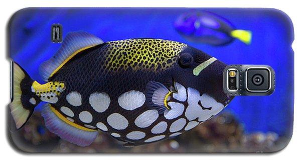 Clown Trigger Fish Galaxy S5 Case