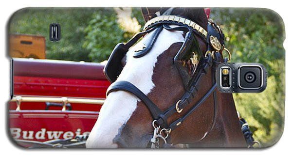 Clydesdale At Esp Galaxy S5 Case by Alice Gipson