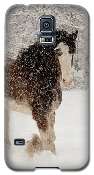 Clydesdale In The Snow Galaxy S5 Case