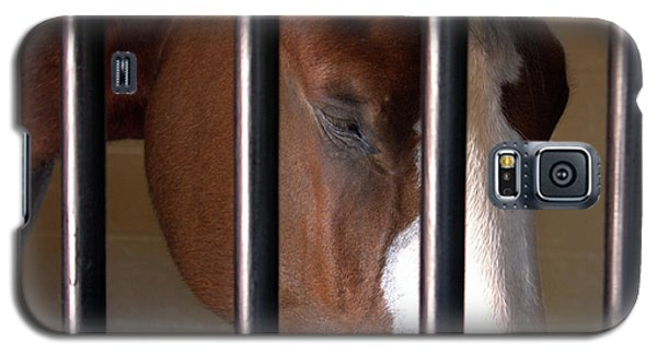 Clydesdale Galaxy S5 Case
