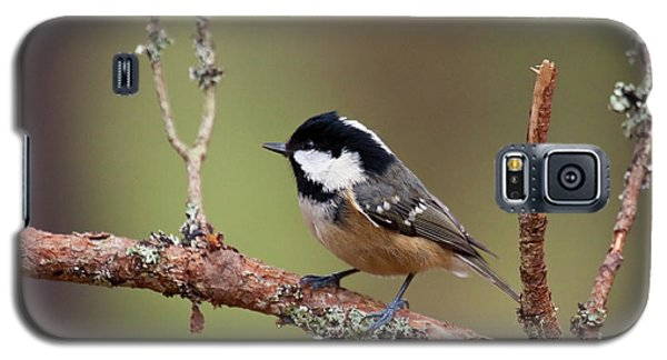 Coal Tit Periparus Ater Galaxy S5 Case