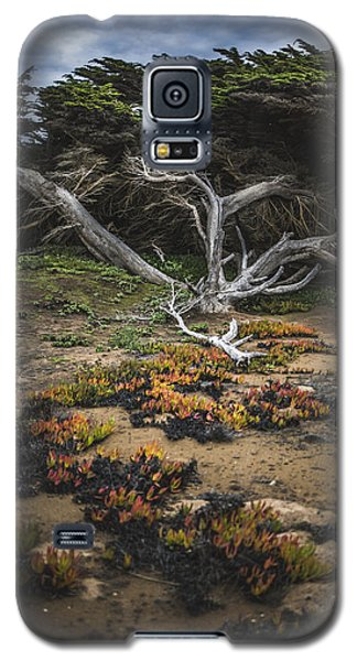 Coastal Guardian Galaxy S5 Case